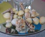 Decorative Natural Shells - Mixed Pack 100g image